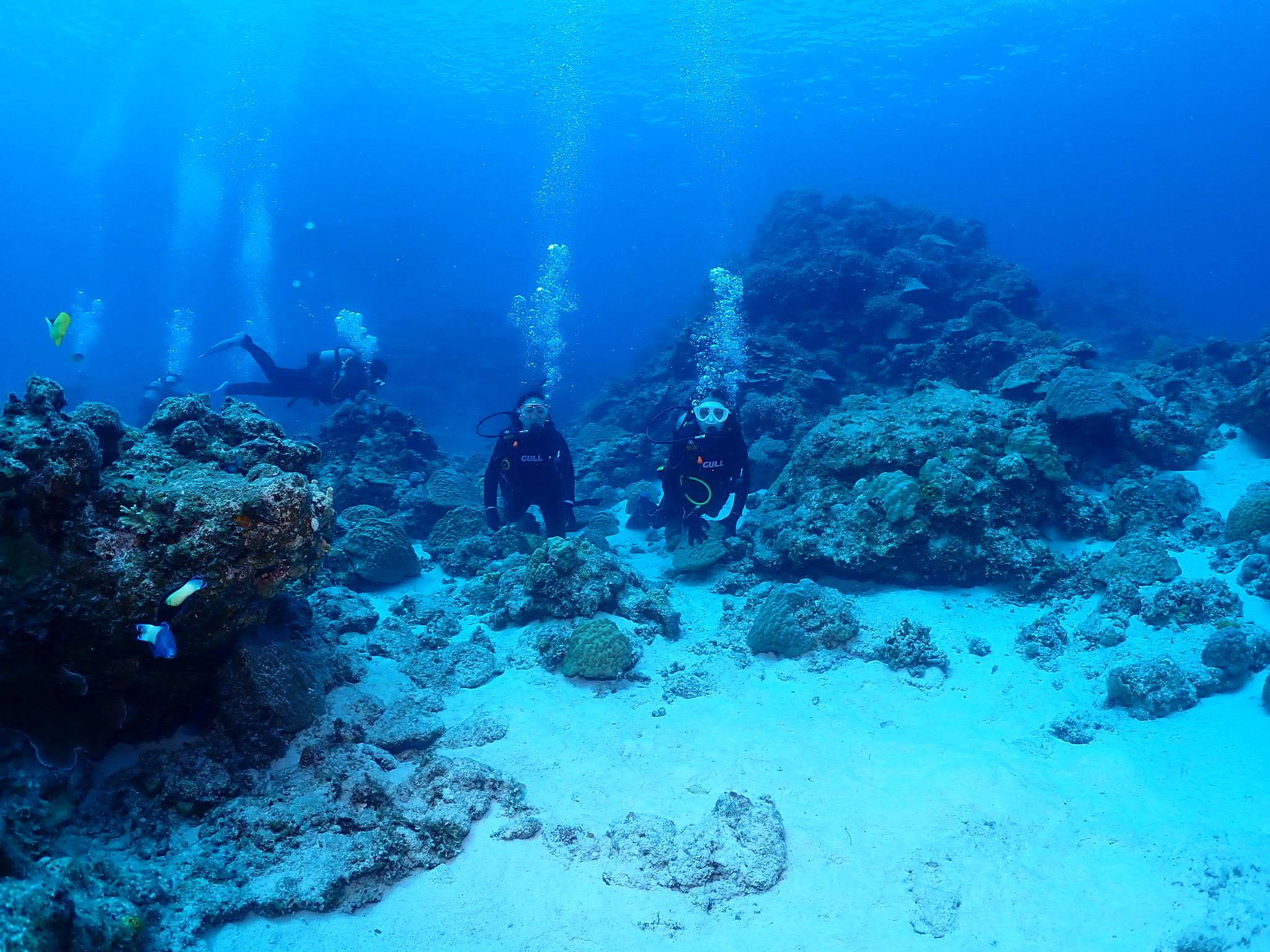 座間味島7番崎でのダイビング