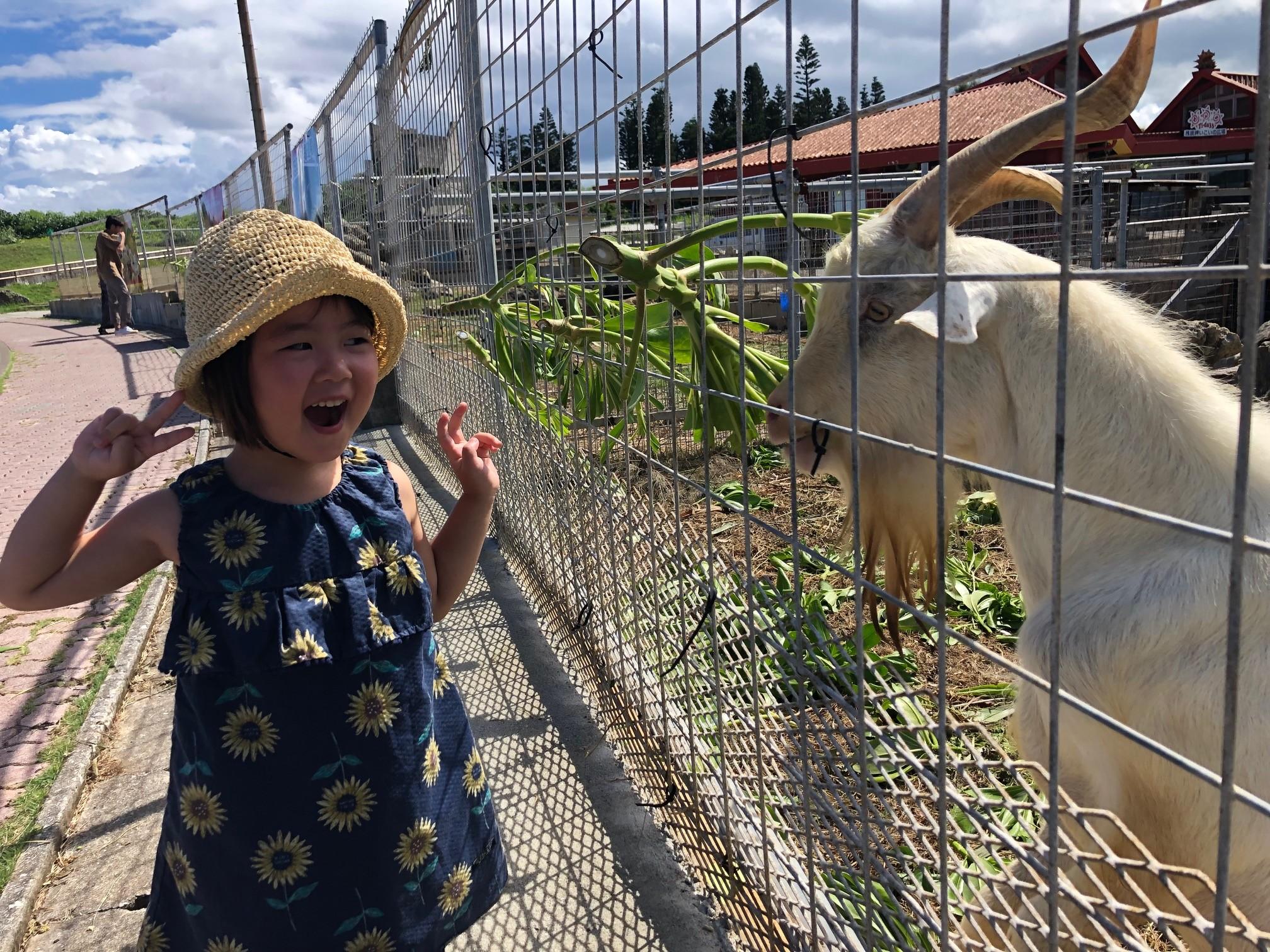 ミニ動物園でヤギに餌やり②