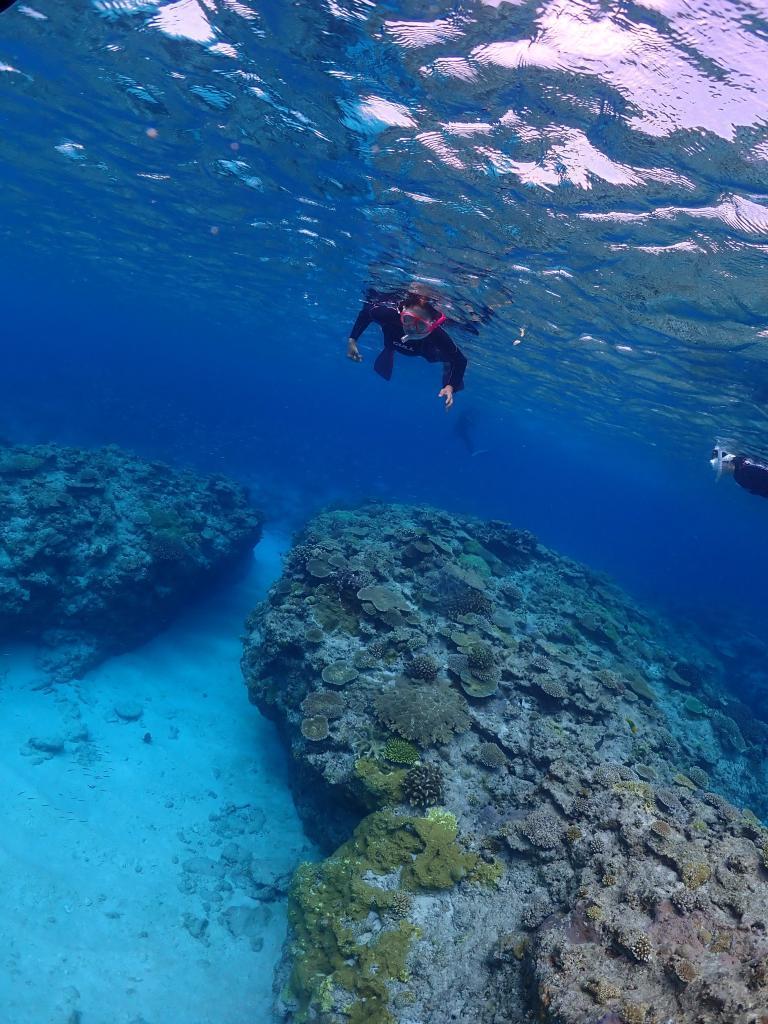 慶良間チービシ・クエフの珊瑚と砂地と魚の住む世界