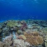 【おすすめスポット】那覇から船で約20分!沖縄慶良間諸島チービシ環礁