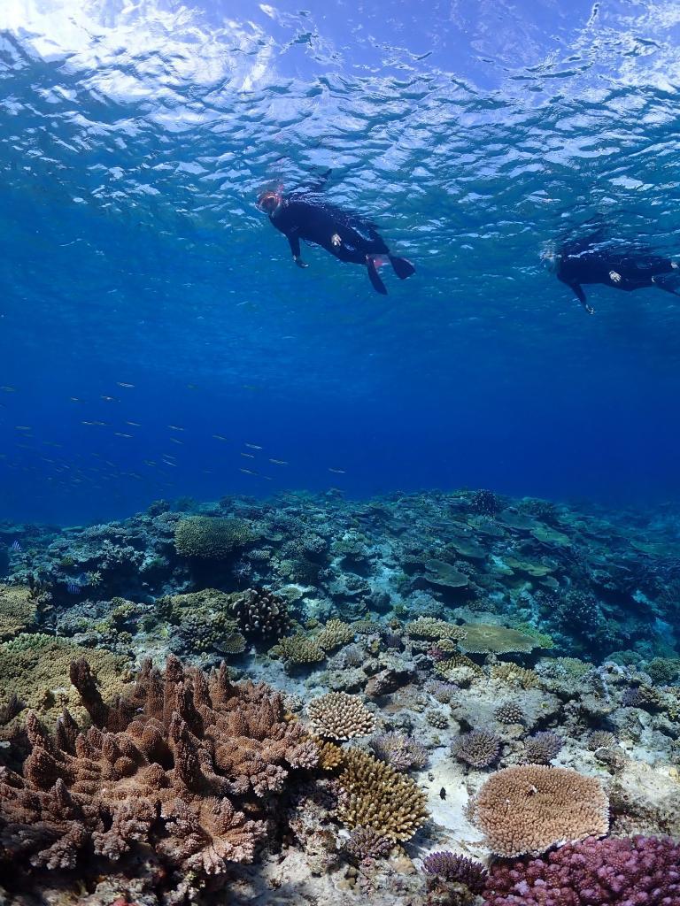 慶良間チービシ・クエフの珊瑚と魚の住む世界2